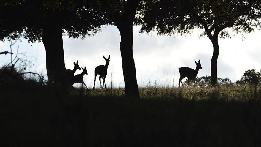 Ecologistas Acción denuncia que 25 millones de animales son abatidos cada año