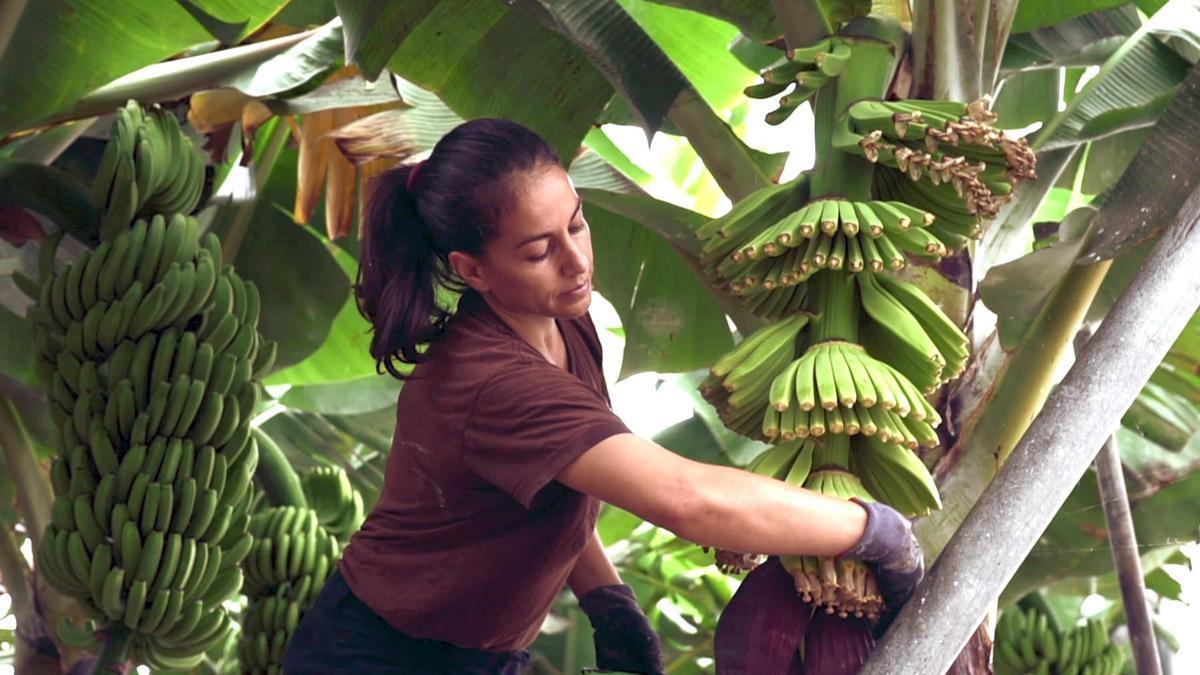 Mónica Barreto en su finca de plátanos ecológicos de Villa de Mazo.