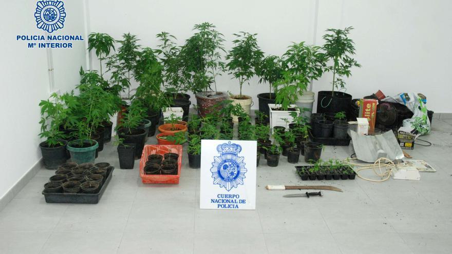 La policía halla una plantación de marihuana en Telde