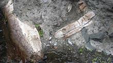 En la imagen, algunos los troncos subfósiles de pino canario encontrados en 2009 en medio de las terrazas del barranco Taburiente. Foto: ÁNGEL PALOMARES.