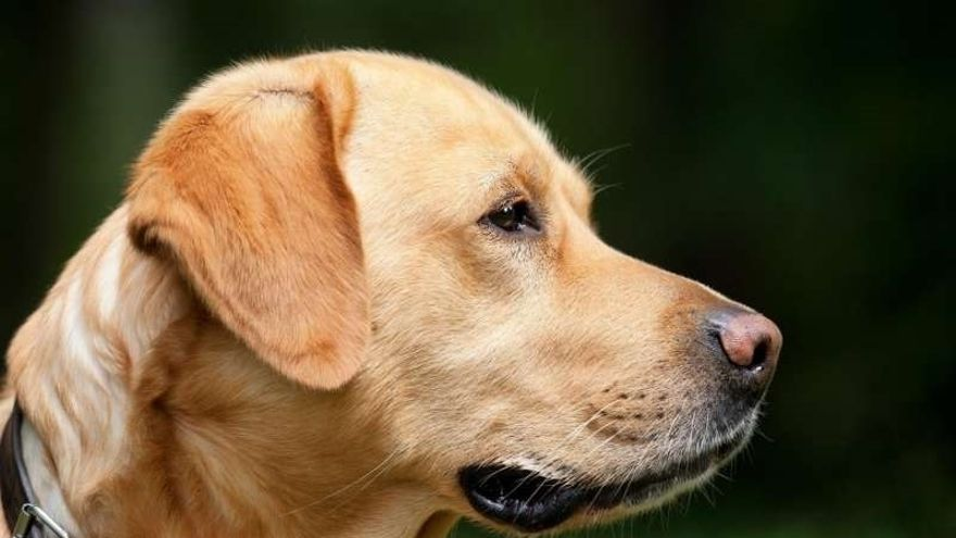 Más de 700 perros participarán este domingo en la 38 edición de la Exposición Internacional Canina de Gipuzkoa