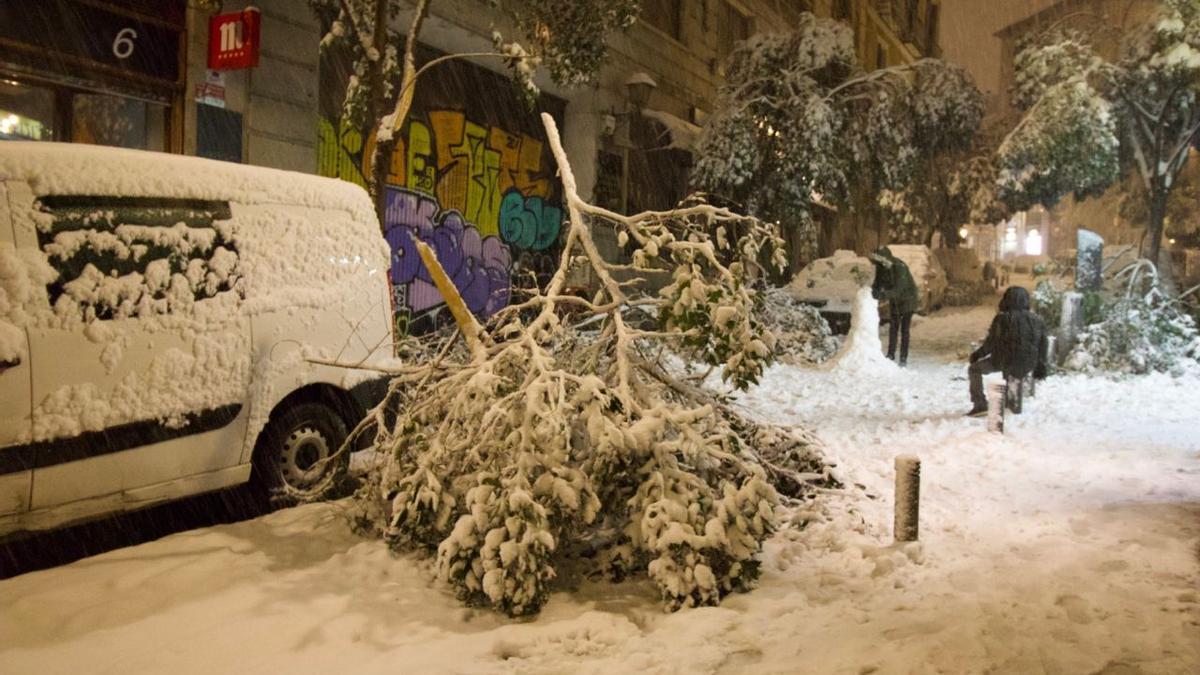 Ramas de árboles caídas por el peso de la nieve que deja el temporal Filomena en la Comunidad de Madrid