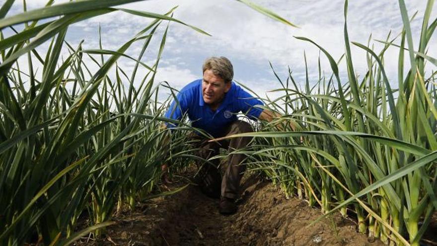 Cultivos en la zona de La Mancha II