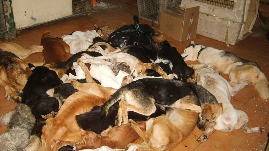 Juzgan este miércoles por presunto maltrato animal a los responsables de la perrera de Puerto Real