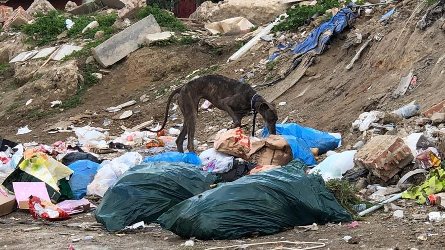 Los perros buscan comida en los vertederos ilegales diseminados por la Cañada Real de Madrid