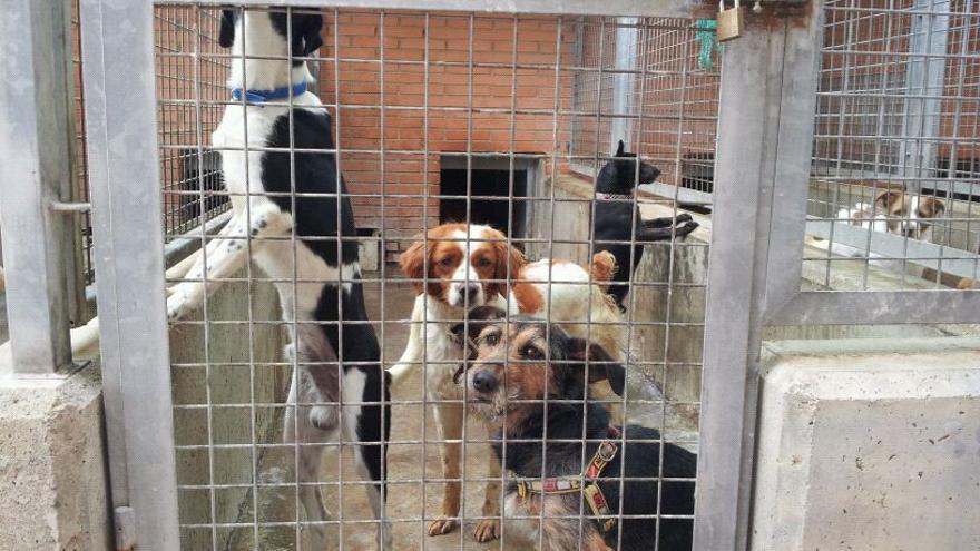 Varios perros en un box del centro de adopción de València