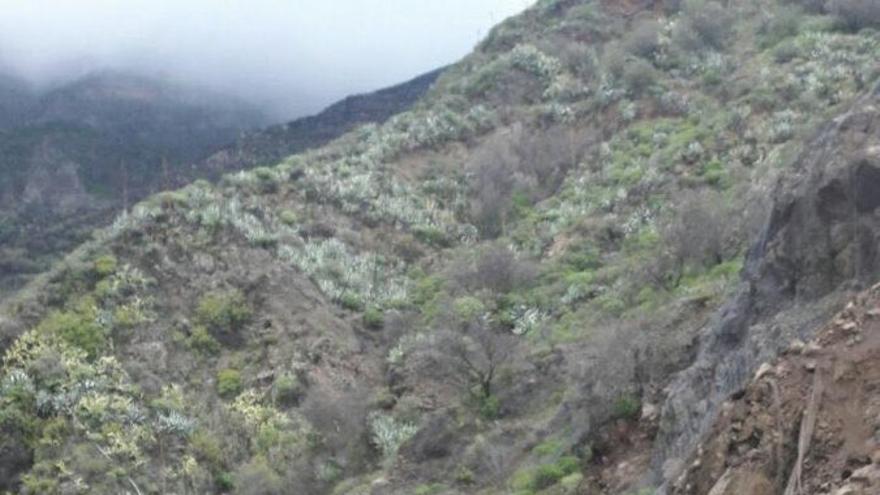 El Cabildo de Gran Canaria solicitará la declaración de emergencia para iniciar las obras de la carretera que va de Tejeda a Artenara