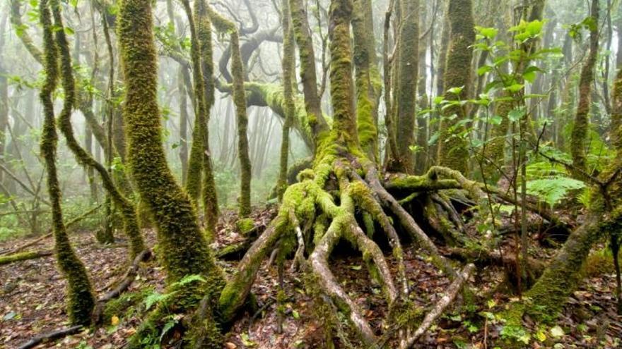 El sector forestal vasco genera 18.000 empleos y aporta el 1,53% del PIB, con un impacto de 1.010 millones anual