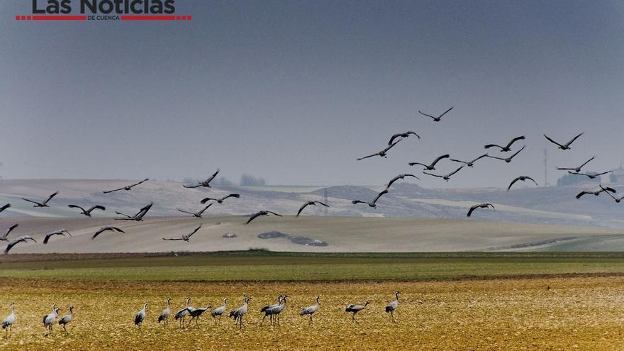 Laguna del Hito, foto por Las Noticias de Cuenca