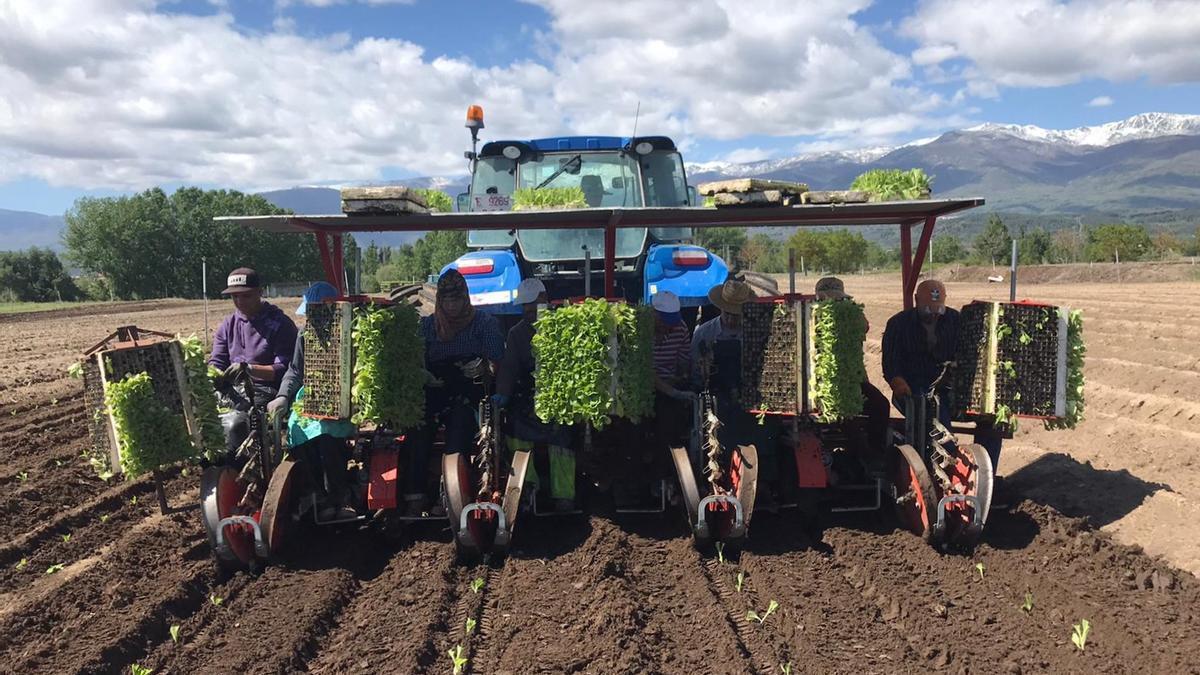 Extremadura ha reclamado que la totalidad de la comarca de La Vera sea  región agronómica