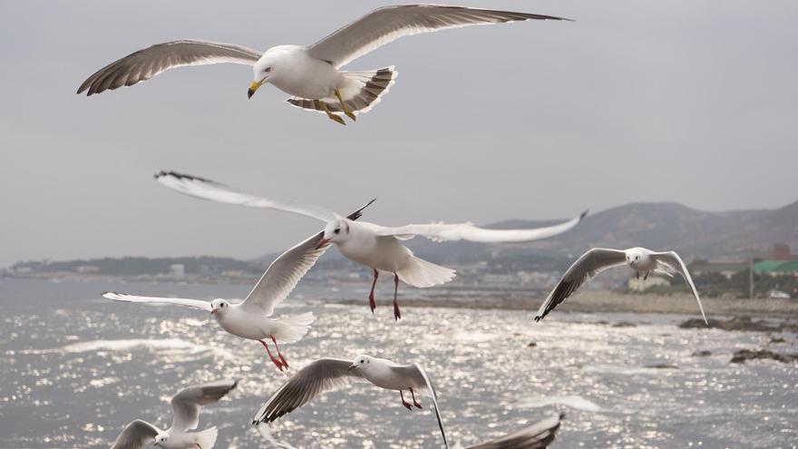 Como las carpas pueden dispersarse a través de las aves acuáticas 1
