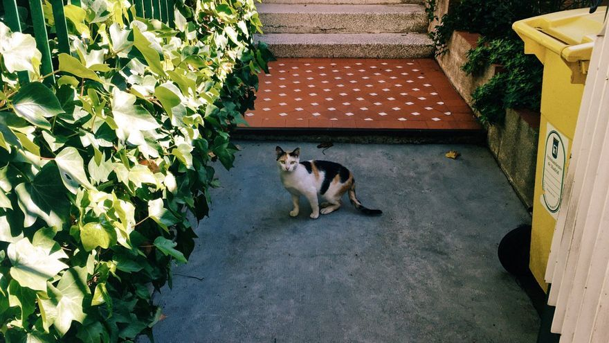 Un gato en la entrada de uno de los edificios que serán expropiados, en el que actualmente no vive nadie