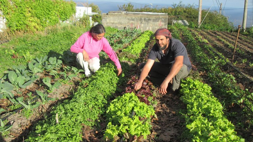 Cultivo de lechugas ecológicas