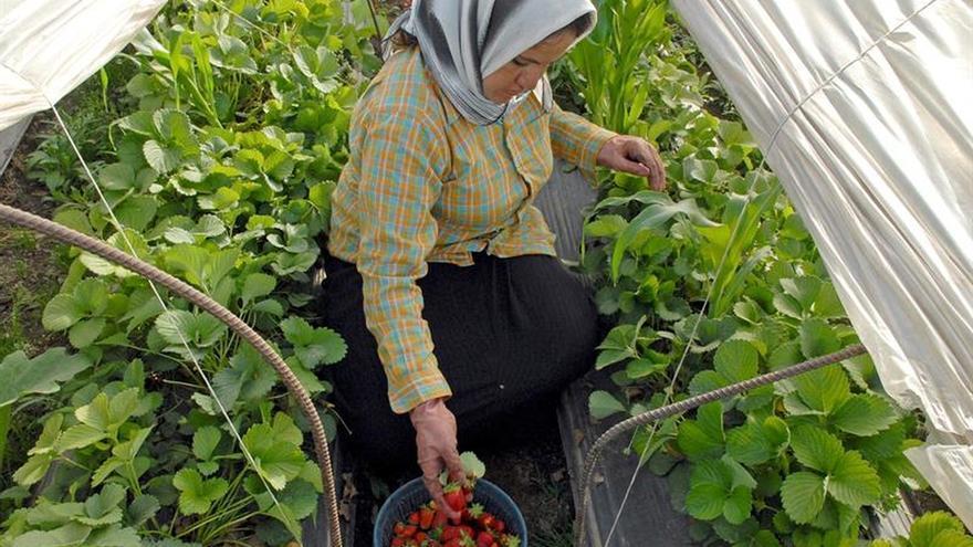 Profesores españoles evalúan las necesidades de la agricultura en el Líbano