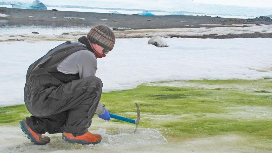 Fotografía facilitada por la Universidad de Cambridge del investigador Matt Davey tomando muestras para el estudio en la Antártida
