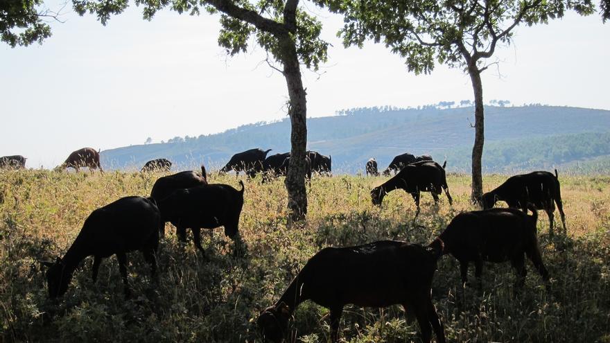 COAG-A demanda una subida de los precios de la leche de cabra