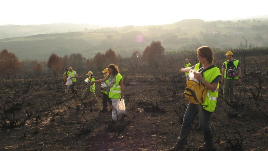 Voluntarios y voluntarias trabajando en un terreno después de un incendio