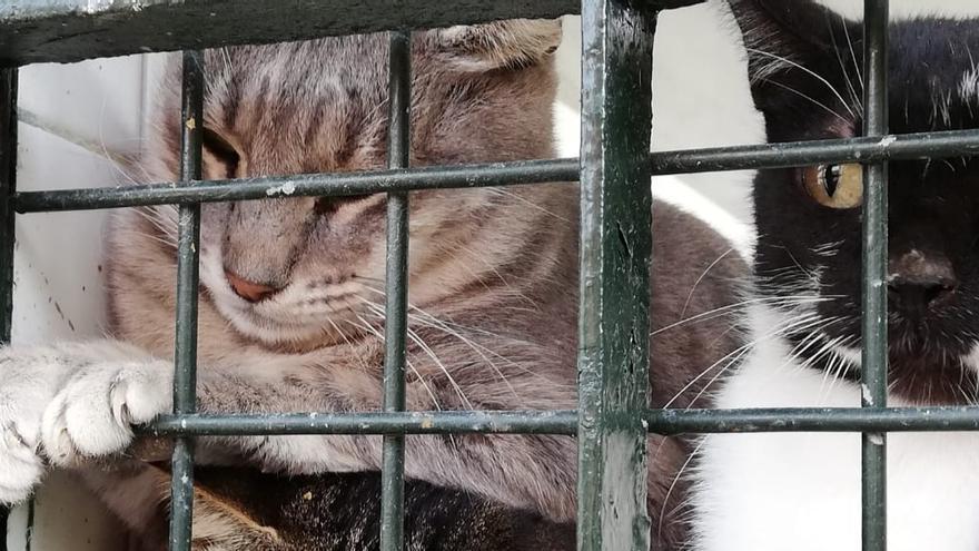 Gatos ferales encerrados en la perrera de Almería.