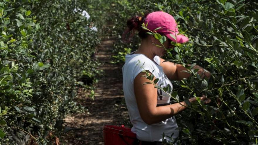 Las temporeras explotadas en Huelva empezarán a trabajar en Albacete en breve