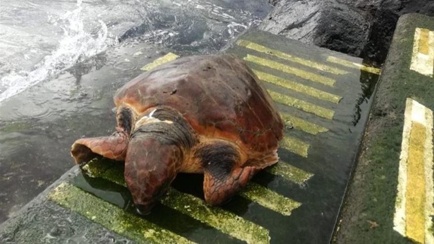 Tortuga muerta encontrada en la costa de Radazul