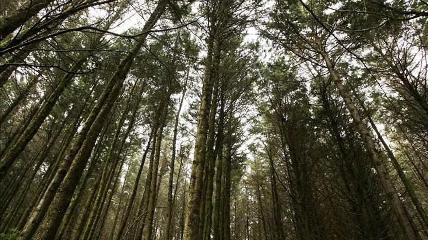 Un nuevo mapa de alta resolución muestra la pérdida mundial de bosques y junglas