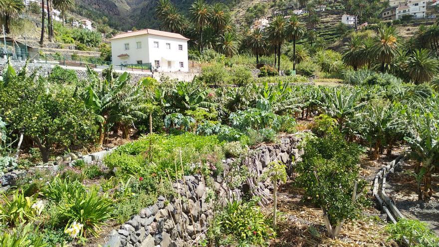 Bancales en el tramo alto de la cuenca principal de Valle Gran Rey