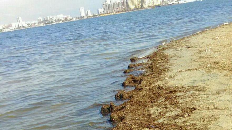 Peces muertos, Mar Menor