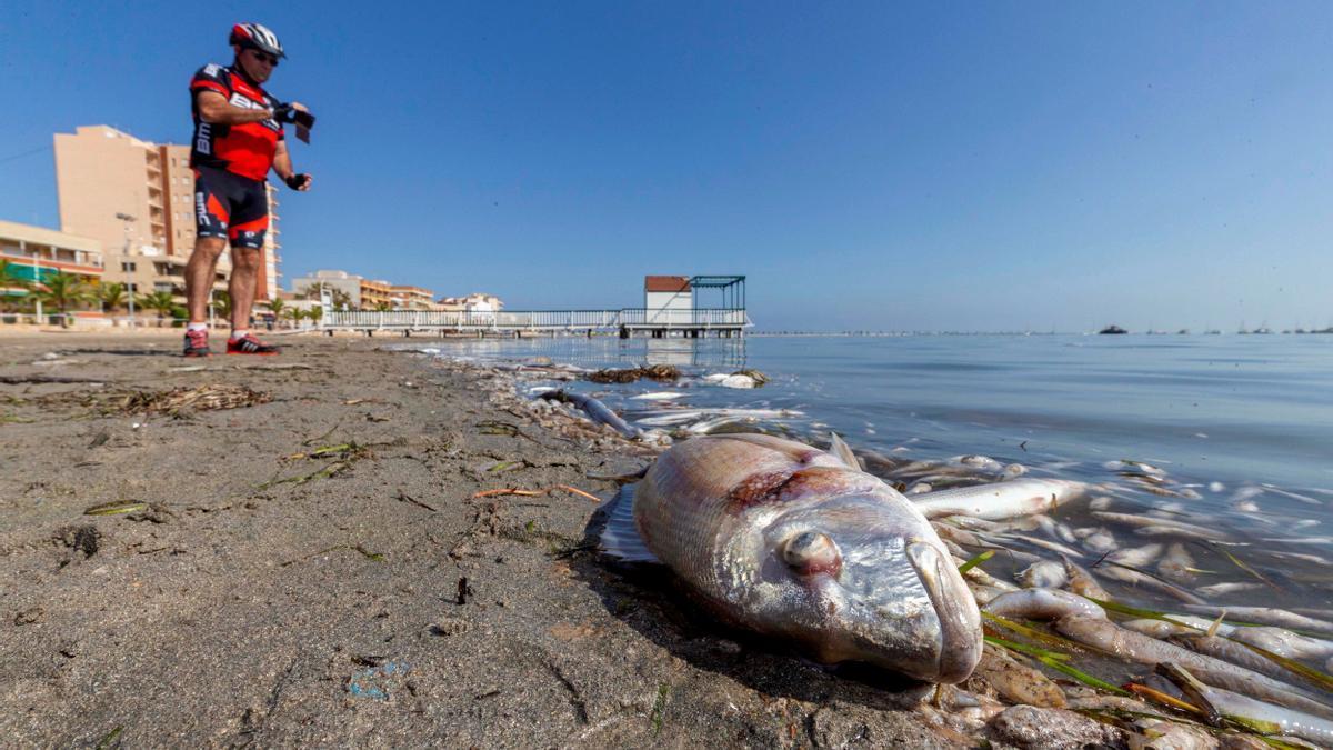 Peces muertos en una playa del Mar Menor. EFE/Marcial Guillén/ Archivo