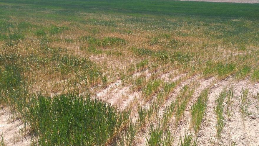 UAGN urge al Gobierno de Navarra a activar medidas contra la sequía