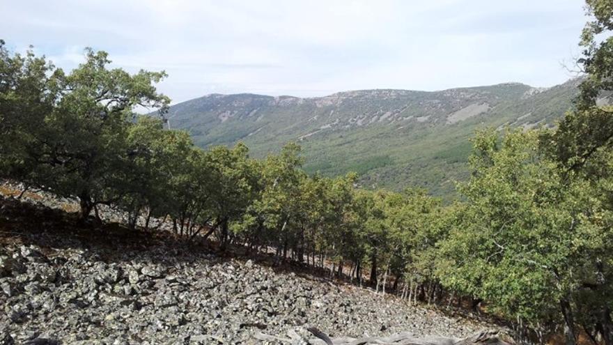 Foto: Valle de Alcudia y Sierra Madrona /Facebook