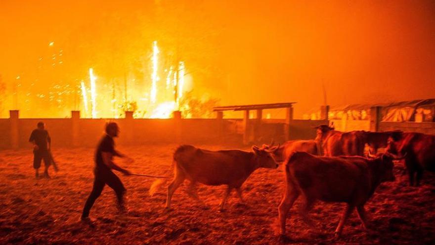 Varios hombres ponen a salvo el ganado durante un incendio forestal declarado en Vieira de Leiria en Marinha Grande (Portugal) este lunes, 16 de octubre.