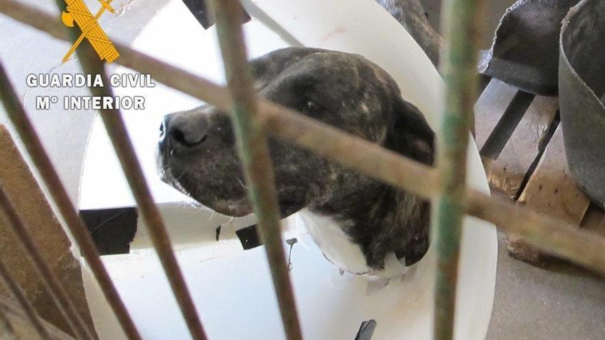 Un vecino de Guadalajara, imputado por un delito de maltrato animal tras abandonar a su perro