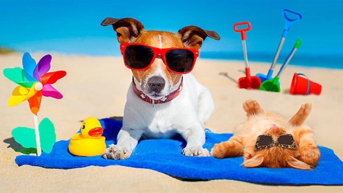 Gatos y perros, estrategias frente al calor veraniego