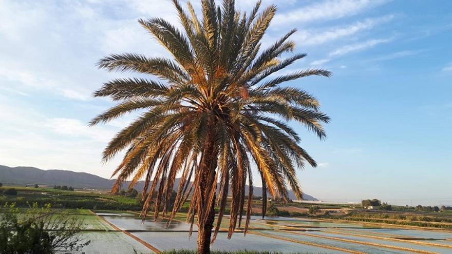 Campos de arroz de Calasparra
