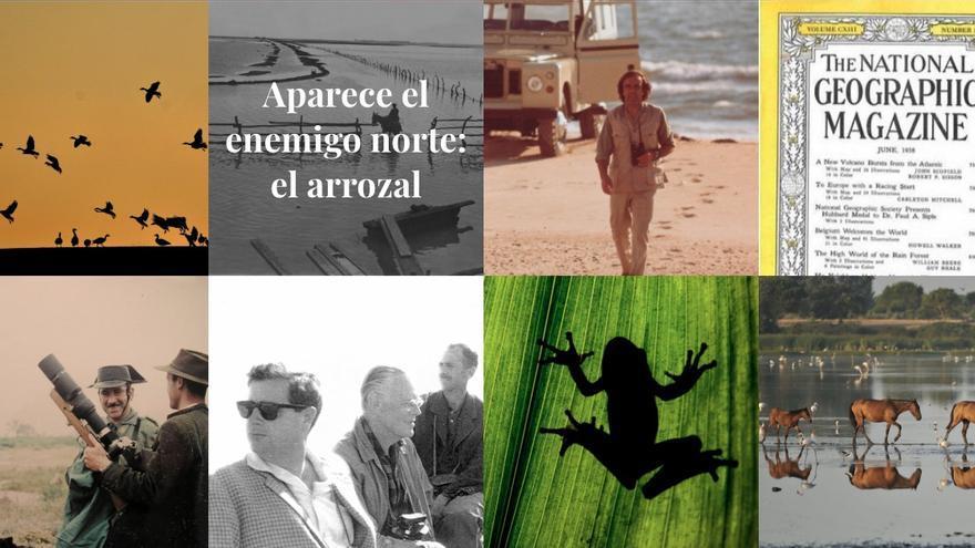 Web Doñana50