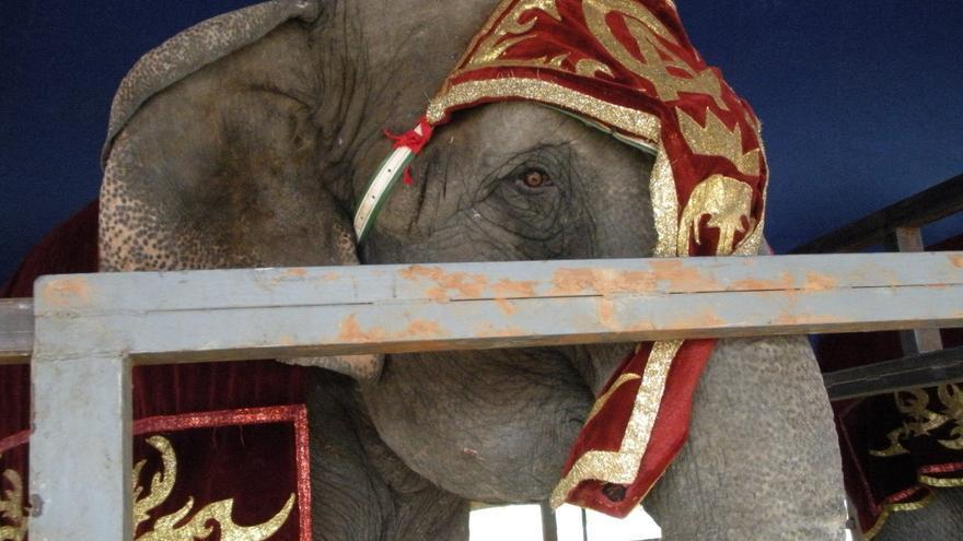 100 municipios catalanes ya han prohibido los circos con animales / CLAC