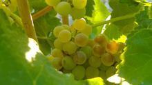 """UPA reclama medidas """"más ambiciosas"""" y """"presupuestos adicionales"""" para atajar la crisis del sector vinícola"""