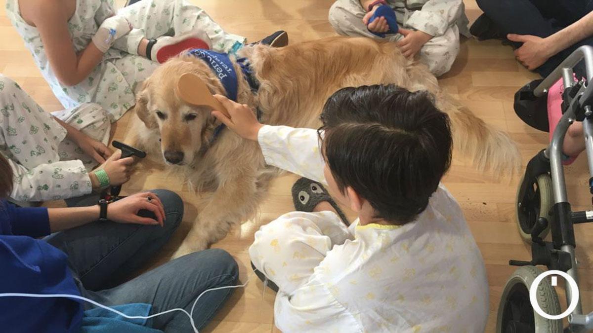Terapia Canina en el Hospital Reina Sofia de Córdoba.
