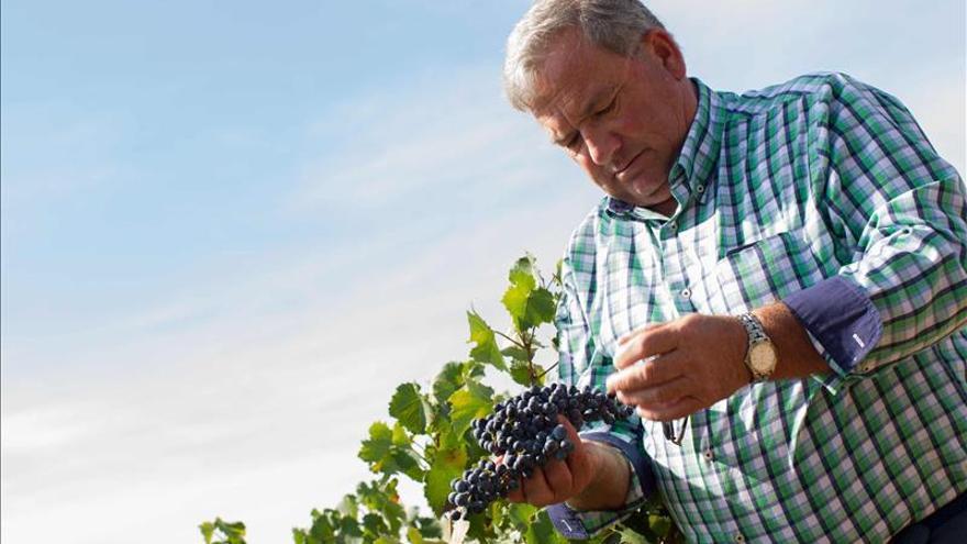 La vendimia en la Rioja confirma una gran añada de 2015 en calidad