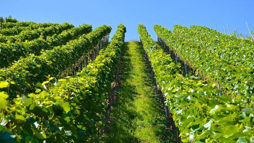 En consulta pública la flexibilización de las ayudas del Programa de Apoyo al Vino para paliar la crisis por la Covid-19
