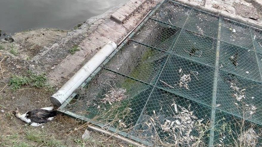 Calor y falta de lluvias, posibles causas de la muerte de aves en La Cantábrica