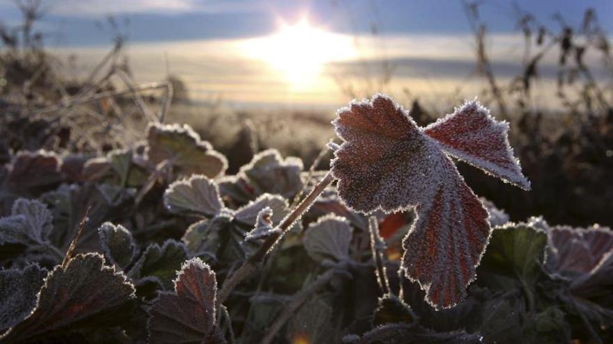 Otras cuatro localidades de Castilla y León figuran entre las diez más frías de este miércoles, con -4,3 en Riaño, en León; cuatro bajo cero en Cervera de Pisuerga, en Palencia; y -3,7 grados en Villablino, en León, y Villardeciervos, en Zamora.