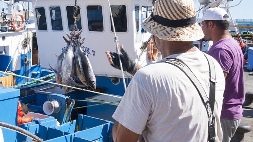 Pesca atún blanco