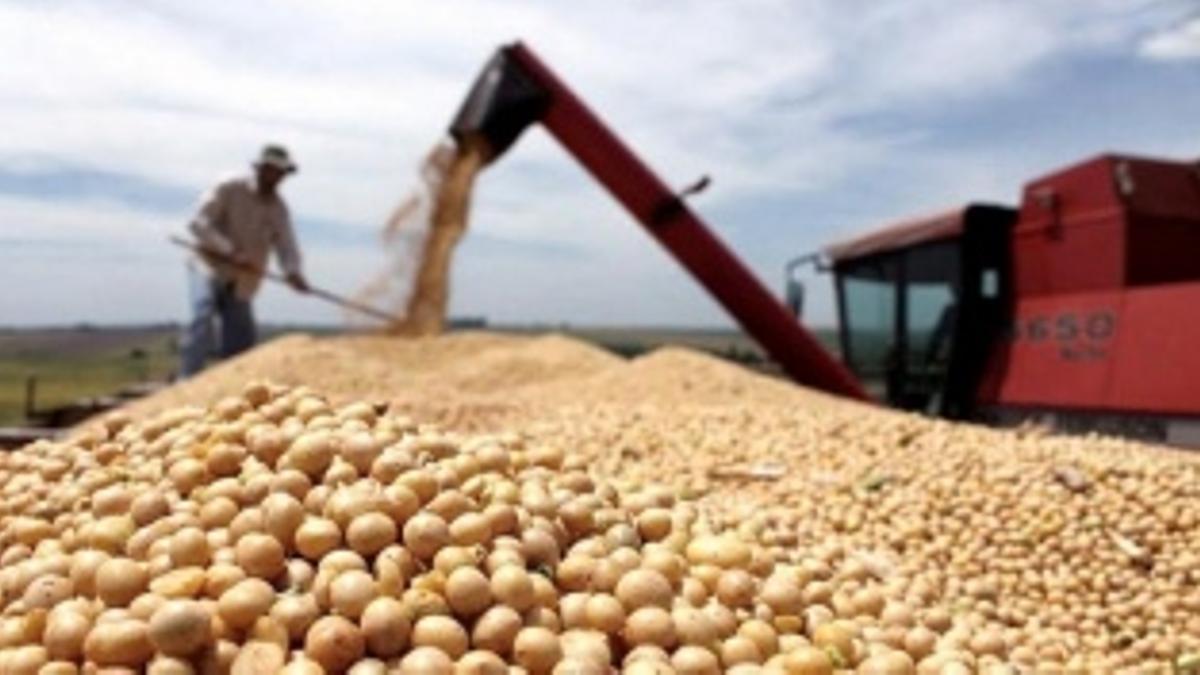 De los 566 dólares que cotizó la soja en Chicago la semana pasada, al productor le quedarían solo unos 206 dólares, según la Asociación de Productores Rurales de Marcos Juárez, Córdoba.