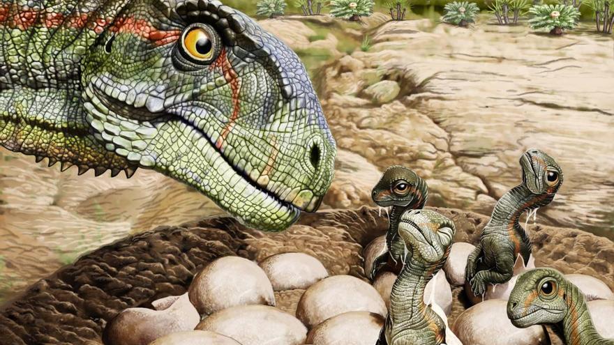 Huevos de Mussaurus, un dinosaurio herbívoro primitivo antecesor de los saurópodos, es decir, aquellos dinosaurios de cuello largo, cuatro patas y de gran tamaño.