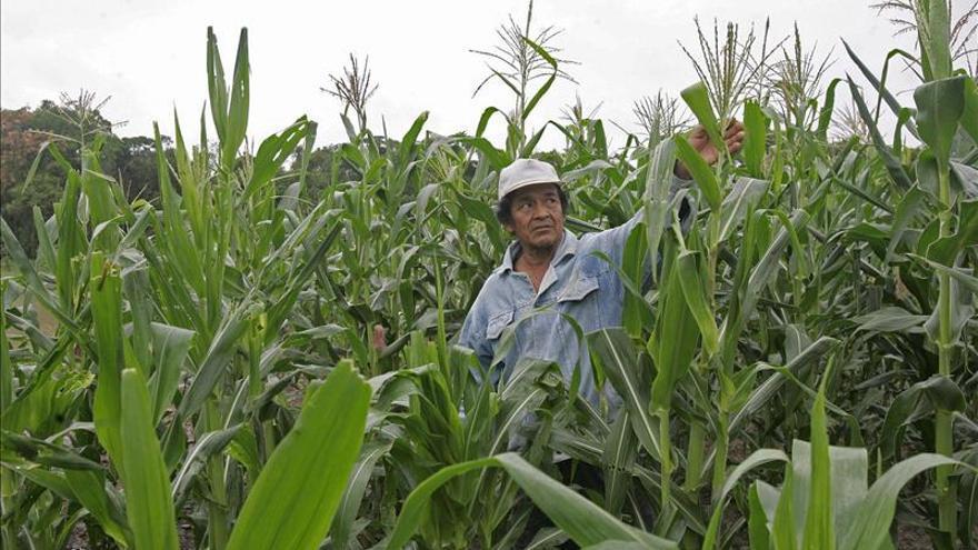 """La FAO y la OMS reivindican una alimentación """"sostenible"""" para mejorar la nutrición"""