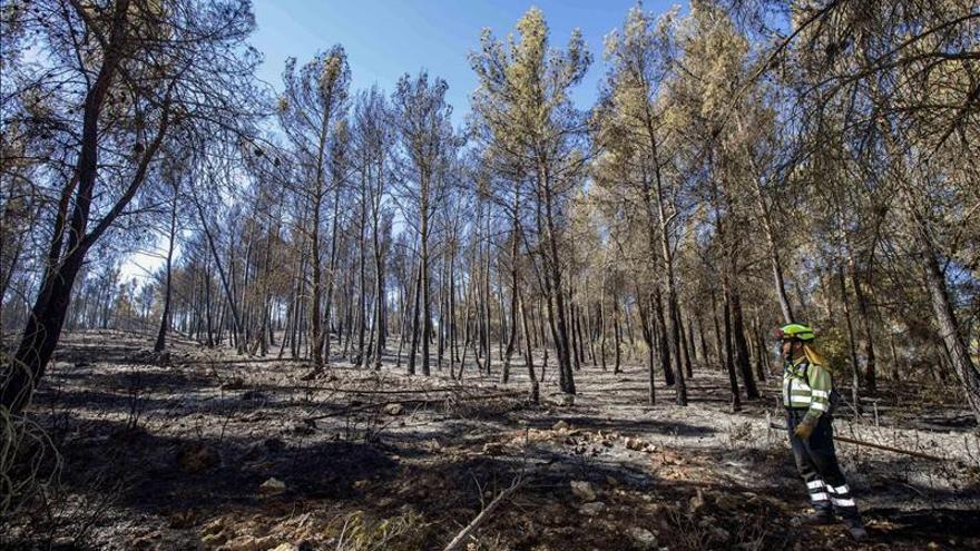 Los medios aéreos se suman a los terrestres en el incendio de Almansa
