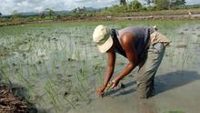 Cuba y la FAO acuerdan un proyecto de 119 millones de dólares para el cambio climático