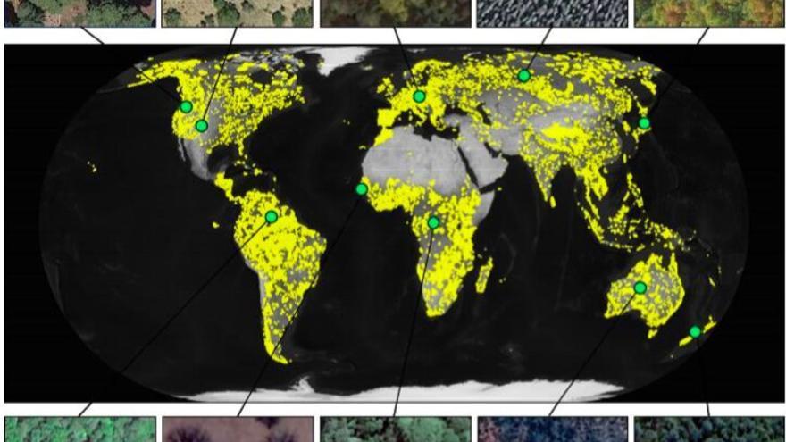 Cobertura forestal observada en espacios protegidos en todo el mundo