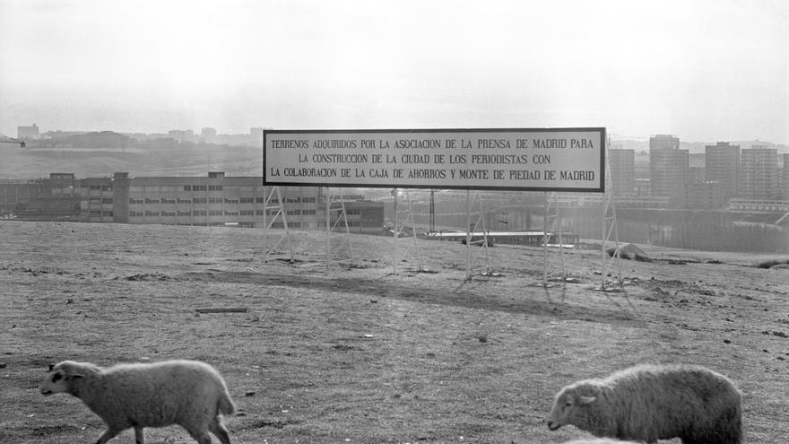 FUTURA CIUDAD DE LOS PERIODISTAS: Madrid, 8-1-1969.- Un rebaño de ovejas pasta en en un terreno situado al norte de la ciudad, que ha sido adquirido por la Asociación de la Prensa de Madrid (APM), con la colaboración de la Caja de Ahorros, para construir en él la futura Ciudad de los Periodistas.